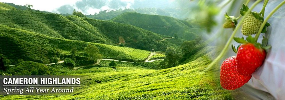 visit cameron highlands
